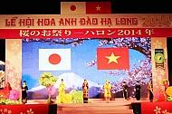 Sôi Động Lễ Hội Hoa Anh Đào Hạ Long 2014