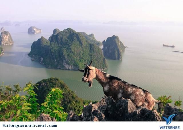 Núi Bài Thơ, Nui Bai Tho